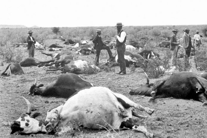 colonialism a disease that destroyed africa The guardian - back to home  dying in disease-ridden death camps such the infamous site on shark island,  africa europe colonialism features.