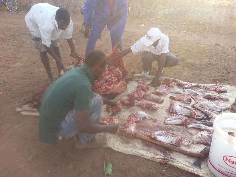 an analysis of the significance of the slaughter of the cattle of the sun Foot-and-mouth disease (fmd) is a highly contagious disease of cloven-hoofed animals including cattle, pigs, sheep and many wildlife species it can cause enormous.